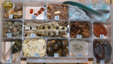 Natures Treasure Box 2012